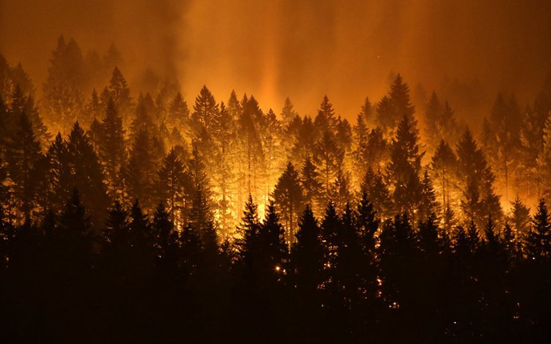 Picture of a wildfire