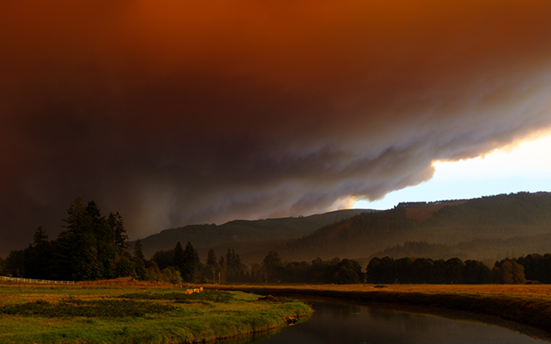 Wildfires Picture